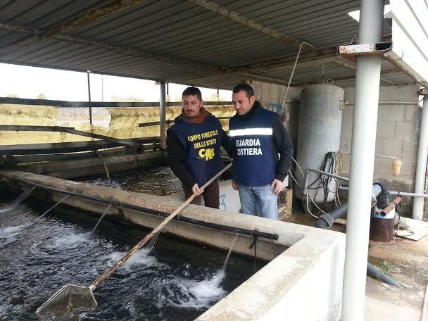 Operazione 39 christmas fish 39 sequestrati 500 kg di anguille for Vasche per allevamento ittico