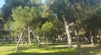 pineta-siponto-comune-manfredonia-lavori-alberi-ambiente-Provincia