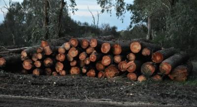 san-marco-in-lamis--furto-legname-Cronaca