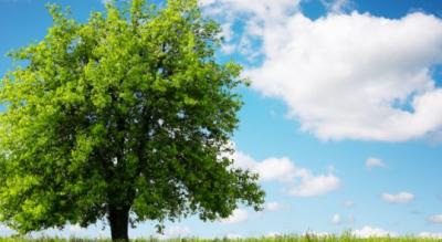 torremaggiore-foggia-iniziativa-albero-per-ogni-nato-Provincia