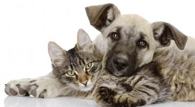 solidarieta-per-cani-e-gatti-randagi--weekend-di-colletta-alimentare-Società
