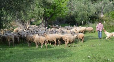 visite-guidate-territorio-gargano-natour-foggia-monte-civita-Società
