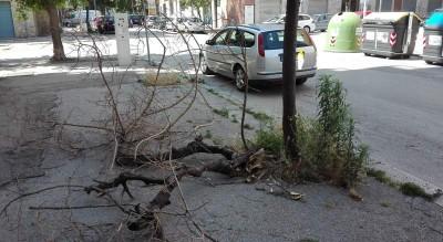 alberi-rione-puglie-in-degrado-abbandono-segnalazione-lettori-Segnalazioni