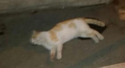 rione-martucci-gatti-avvelenati-morti-sette-settimana-segnalazione-Società