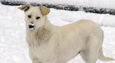 allarme-protezione-animali-cani-avvelenati-in-provincia-di-foggia-Cronaca
