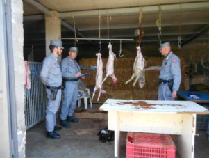 controlli-carabinieri-foggia-provincia-irregolarita-carne-macelleria-Cronaca