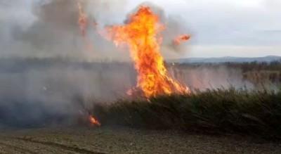 incendi-sterpaglie-strada-appello-comando-provinciale-vigili-fuoco-Cronaca