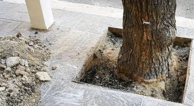 liberate-conchette-alberi-via-rosati-foggia-cementate-Cronaca